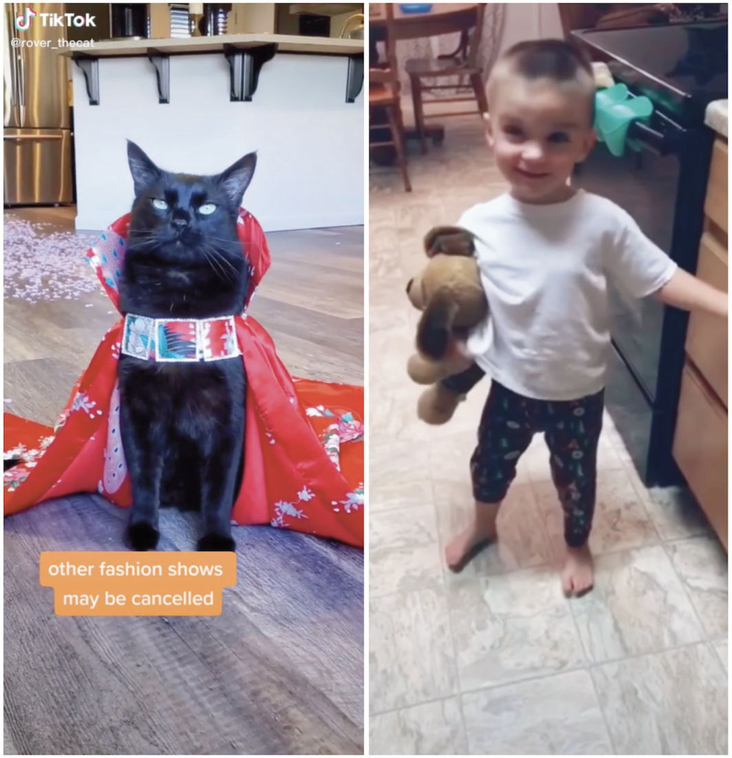 Left: Rover the Cat TikTok screen grab, May 23, 2020. Right: Kayla Holley TikTok screen grab, February 10, 2020.